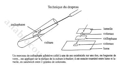 Drapeautech